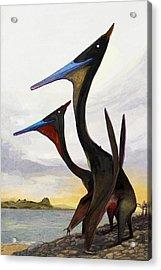 Moganopterus Pterosaurs Acrylic Print