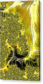 Mohadi Acrylic Print by Jeff Iverson