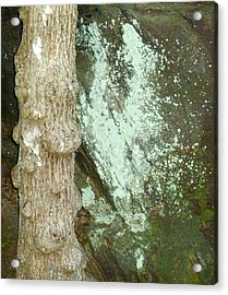 Mold On Rock Acrylic Print by Pete Trenholm