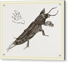 Mole-cricket Acrylic Print by Litz Collection