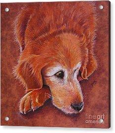 Mollie Acrylic Print by Marilyn Smith