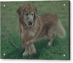 Molly And Her Stick Acrylic Print by Debbie Stonebraker
