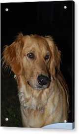 Acrylic Print featuring the photograph Molly by Ramona Whiteaker
