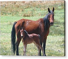 Mom And Daughter Acrylic Print by Amy Ernst