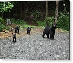 Acrylic Print featuring the photograph Momma And Three Bears by Jan Dappen