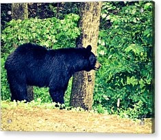 Acrylic Print featuring the photograph Momma Bear by Jan Dappen