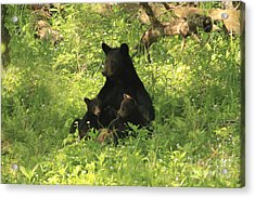 Acrylic Print featuring the photograph Mommy And Babies by Geraldine DeBoer
