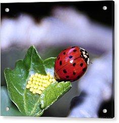 Mommy Ladybug Acrylic Print