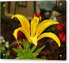 Mom's Yellow Flower Acrylic Print by B Wayne Mullins