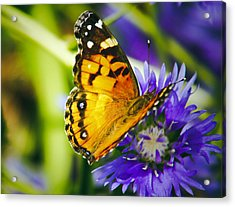 Monarch And Flower Acrylic Print by Debra Crank