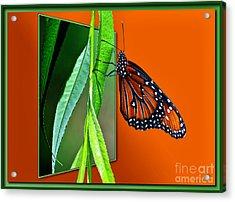 Monarch Butterfly 01 Acrylic Print by Thomas Woolworth