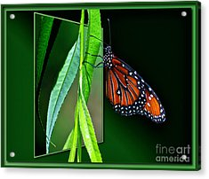 Monarch Butterfly 04 Acrylic Print by Thomas Woolworth