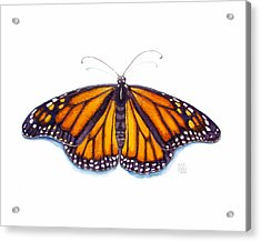Monarch Butterfly Acrylic Print by Catherine Noel