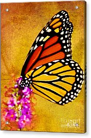 Monarch Butterfly Color Splash Sunset Acrylic Print