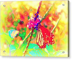 Acrylic Print featuring the painting Monarch Butterfly  by David Mckinney