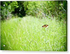 Monarch Butterfly In Green Field Acrylic Print by Thorpeland Photography