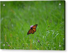 Acrylic Print featuring the photograph Monarch Butterfly by James Petersen