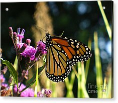 Acrylic Print featuring the photograph Monarch Butterfly by Lingfai Leung