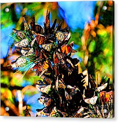 Monarch Butterfly Migration Acrylic Print by Tap On Photo