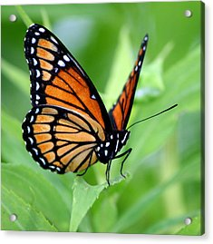 Monarch Dreaming  Acrylic Print by Neal Eslinger