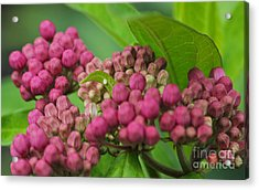 Monarch Egg Acrylic Print