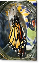 Monarch In A Jar Acrylic Print