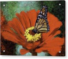 Monarch Landing Acrylic Print by Renee Skiba