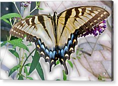 Monarch Majesty Acrylic Print by Judith Morris