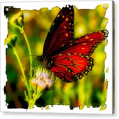 Monarch Of The Day Acrylic Print