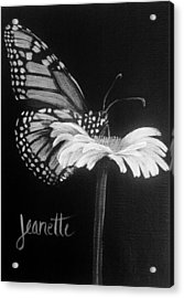 Monarch On A Daisy Acrylic Print