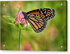 Monarch On Clover Acrylic Print