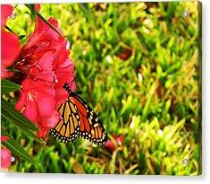 Monarch Acrylic Print by Shelly Grobstig