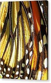 Monarch Wing Macro Acrylic Print by Judy Via-Wolff
