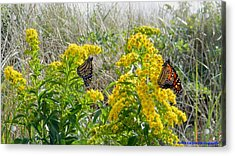 Monarchs On The Beach Acrylic Print