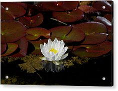 Monet Memories Acrylic Print by Marilyn Wilson