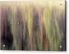 Acrylic Print featuring the photograph Monet's Duck by Ken Dietz