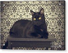 Mongo The Robust Cat Acrylic Print by Jennifer Ramirez