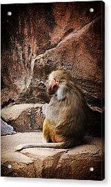 Monkey Business Acrylic Print by Karol Livote
