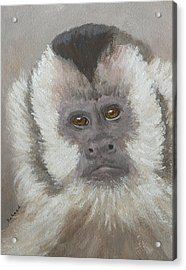 Monkey Gaze Acrylic Print by Margaret Saheed