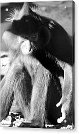 Monkey See Monkey Do Acrylic Print by Dick Botkin