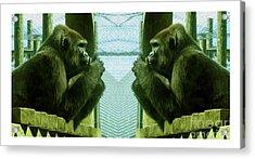 Monkey See Monkey Do Acrylic Print by Nina Silver