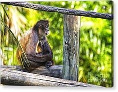 Monkey Sitting Acrylic Print by Stephanie Hayes