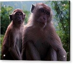 Monkey's Attention Acrylic Print by Kaleidoscopik Photography