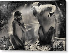 Acrylic Print featuring the photograph Monkeys In Freedom by Christine Sponchia