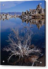 Mono Lake Salt Bush Acrylic Print