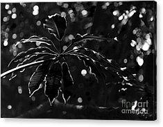 Monochrome Leaf  Acrylic Print by Nicholas Burningham