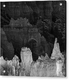 Monochrome Morning Acrylic Print