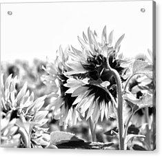 Monochrome Summer Acrylic Print by Georgia Fowler