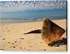 Monster Clam Acrylic Print by Adam Jewell