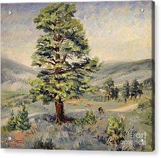 Montana Grazer 1935 Acrylic Print